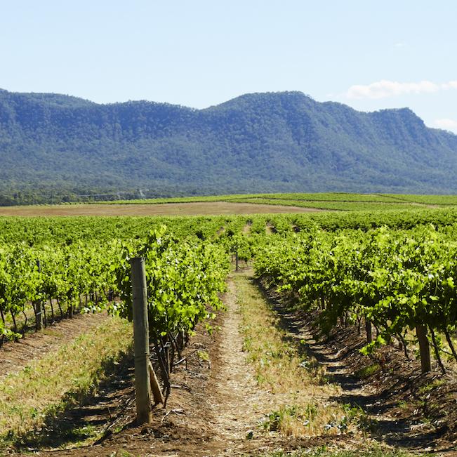 Hunter Valley Wine 2
